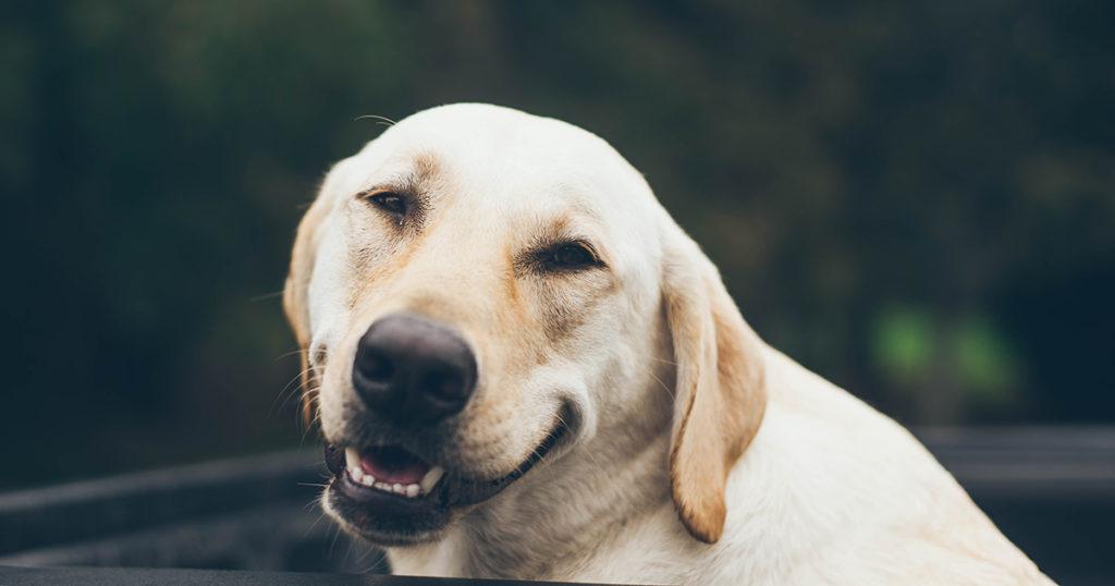 サイモン・ペッグのような抜けがある犬