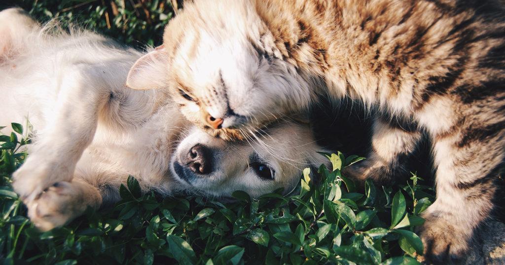 バディである犬と猫